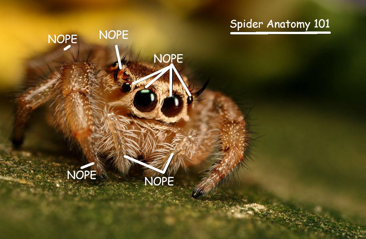 Spider Anatomy 101 124013873 Added By Frostdrachen At Silly Spider