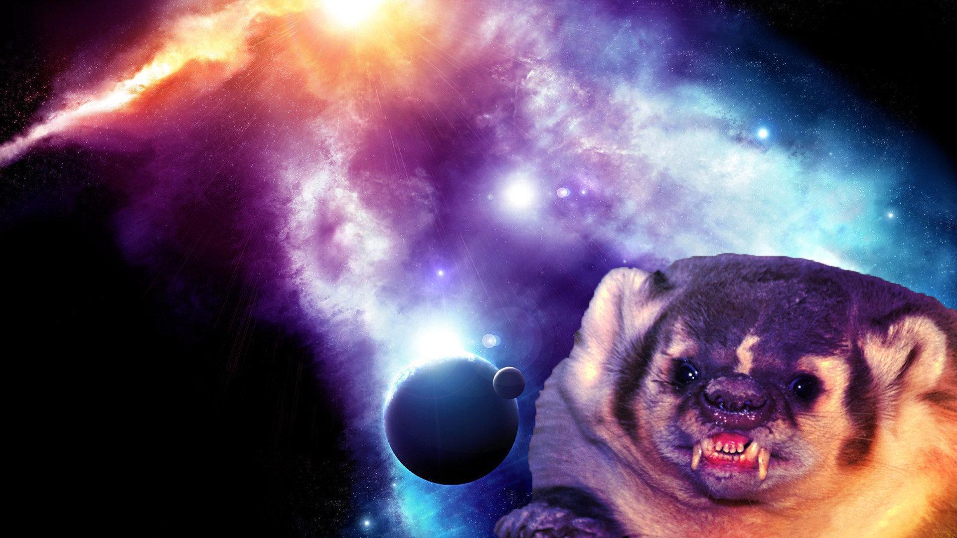 состав картинки животные в космосе фоне