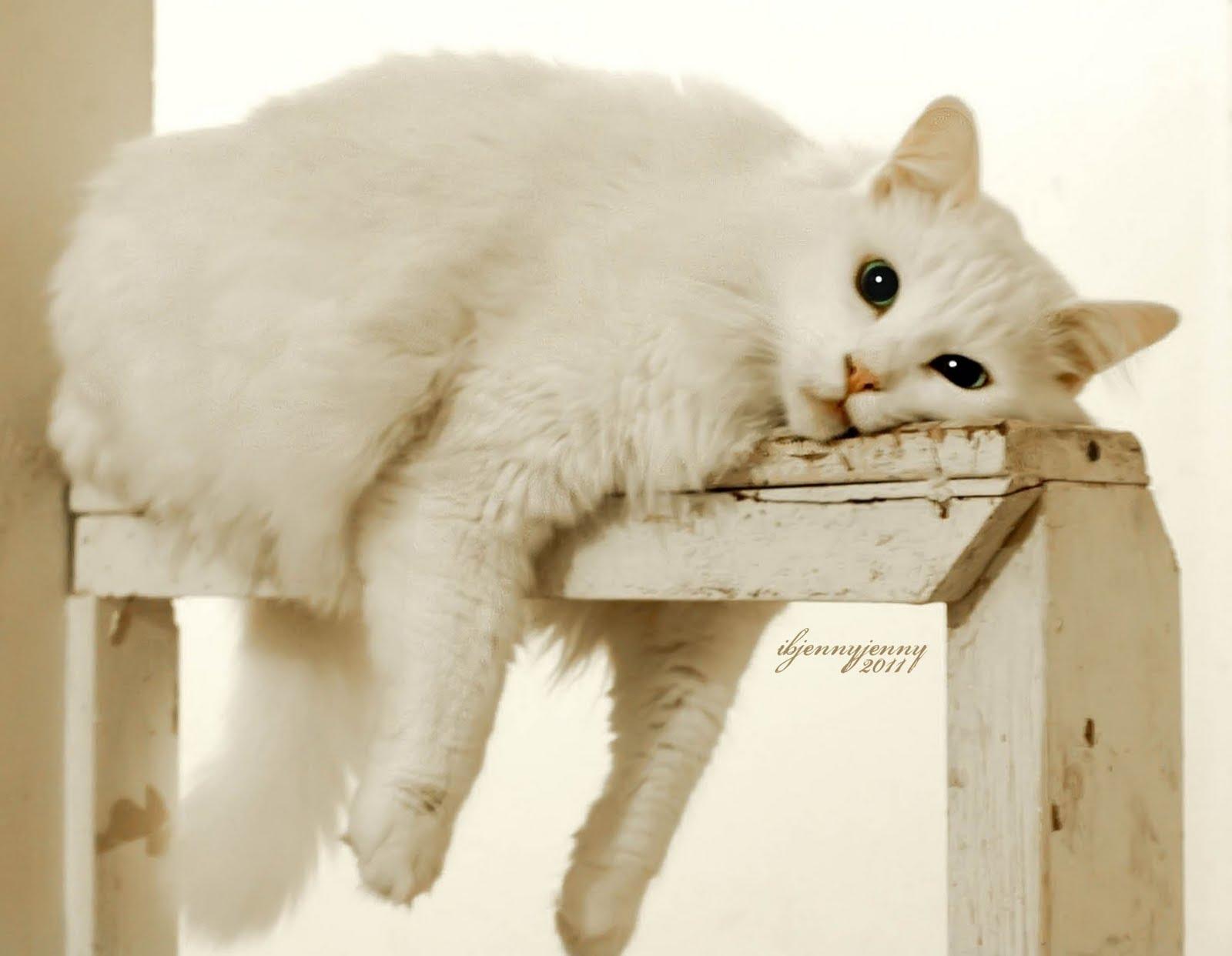 Картинки кошке скучно