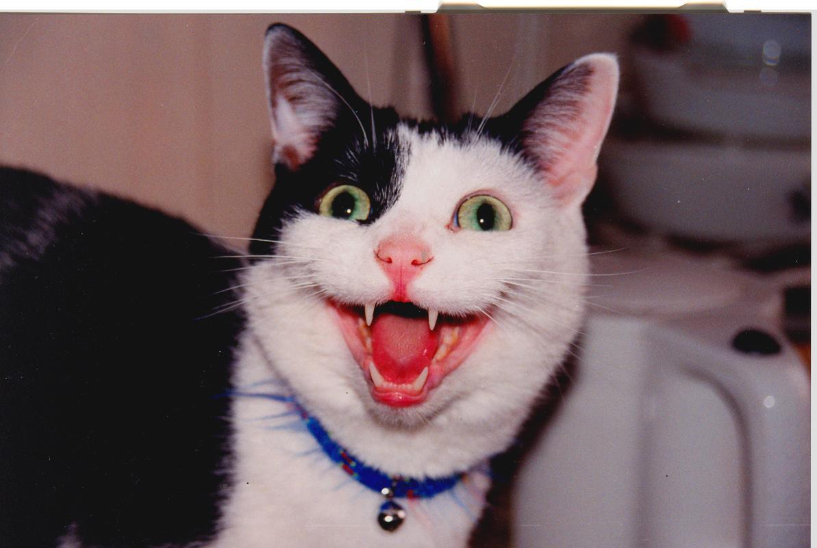 Коты которые смеются