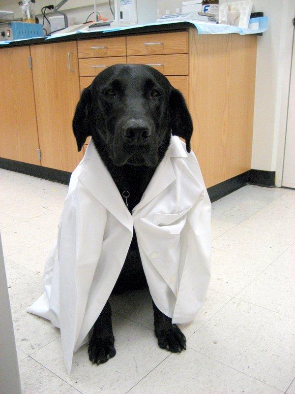 Image result for black lab science