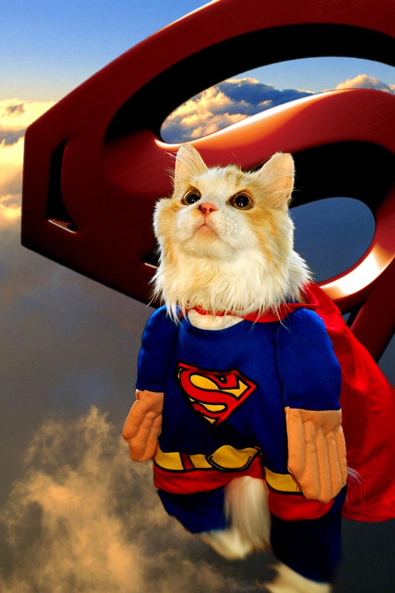 Картинки про супер кошек
