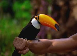 Big beak, bigger heart